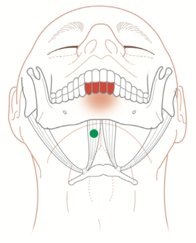 Digastricus Trigger Points