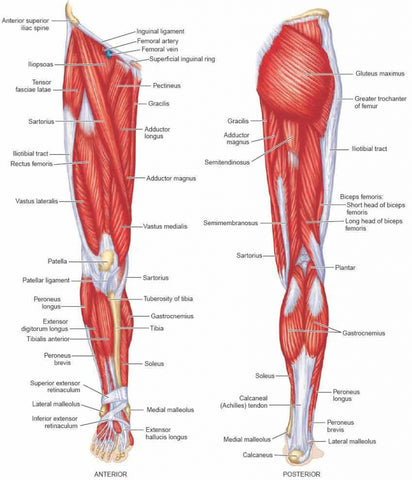 Lower Body Trigger Points