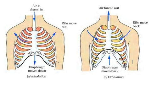 Diaphragm and Breathing Trigger Points