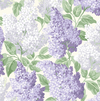 Lilac - Lilac and Dove on White