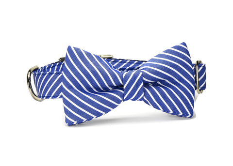 Blue Stripe Bow Tie Dog Collar