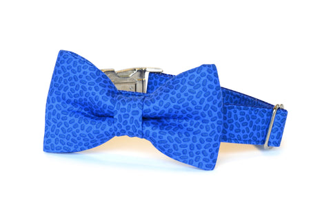 New! Royal Blue Confetti Bow Tie Dog Collar