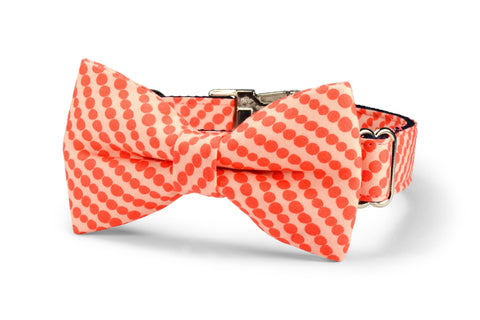Coral Bubbles Bow Tie Dog Collar