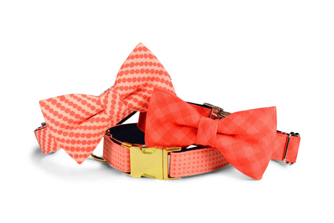 Coral Polka Dot Dog Collar w/ Gold Hardware