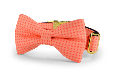 Coral Polka Dot Bow Tie Dog Collar w/ Gold Hardware