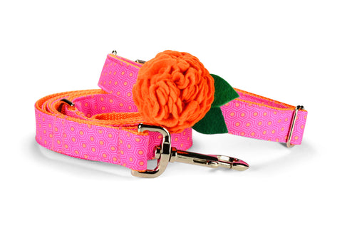 Pink And Orange Tortoise Shell Bloom Dog Collar w/ Orange Bloom