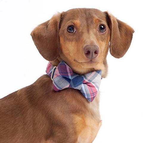Americana Plaid Bow Tie Dog Collar