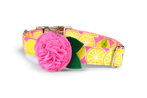 Pink Lemonade Bloom Dog Collar w/ Carnation Bloom