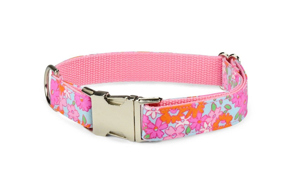 Lilly P. Dog Collar