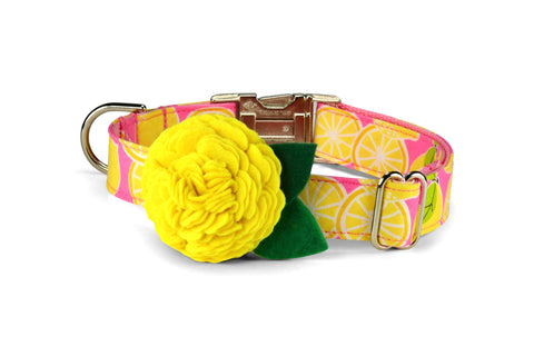 Pink Lemonade Bloom Dog Collar w/ Yellow Bloom