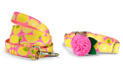 New! Pink Lemonade Bloom Collar and Leash Set w/ Carnation Bloom