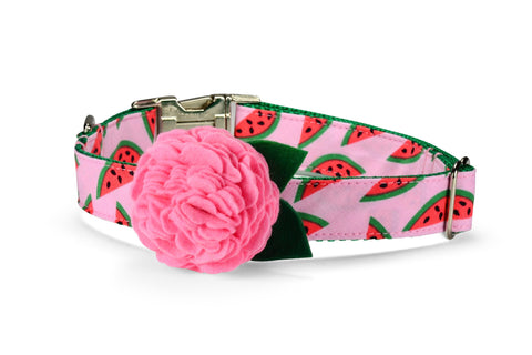 The Watermelon Bloom Dog Collar w/ Carnation Bloom