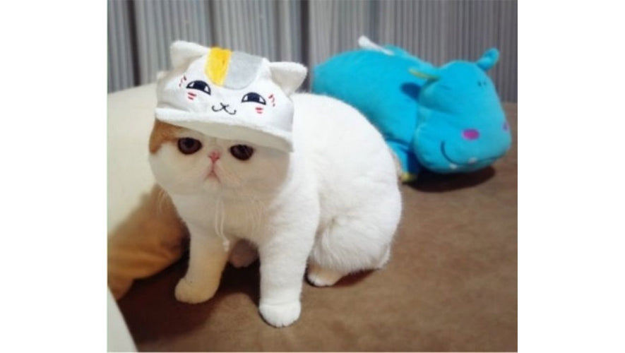 cuest_cats_snoopy1