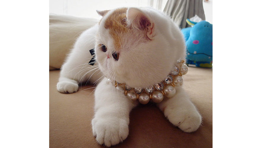 cutest_cats_snoopy4
