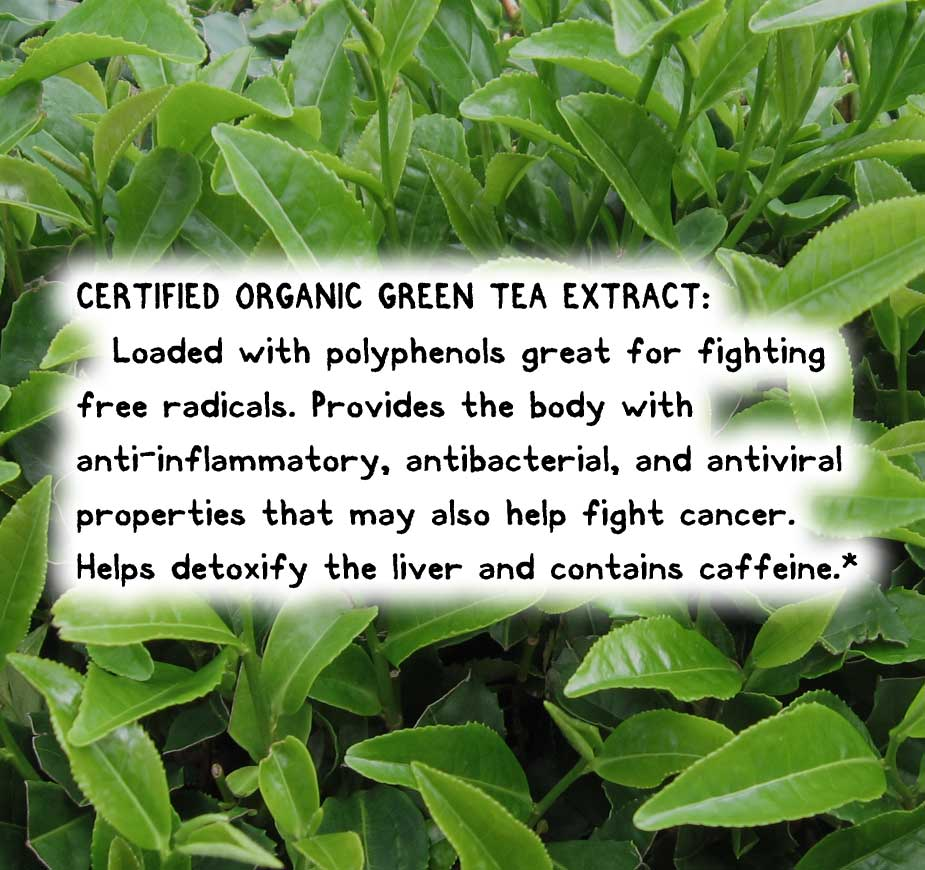 CERTIFIED ORGANIC GREEN TEA EXTRACT: Loaded with polyphenols great for fighting free radicals. Provides the body with anti-inflammatory, antibacterial, and antiviral properties that may also help fight cancer. Helps detoxify the liver and contains caffeine.