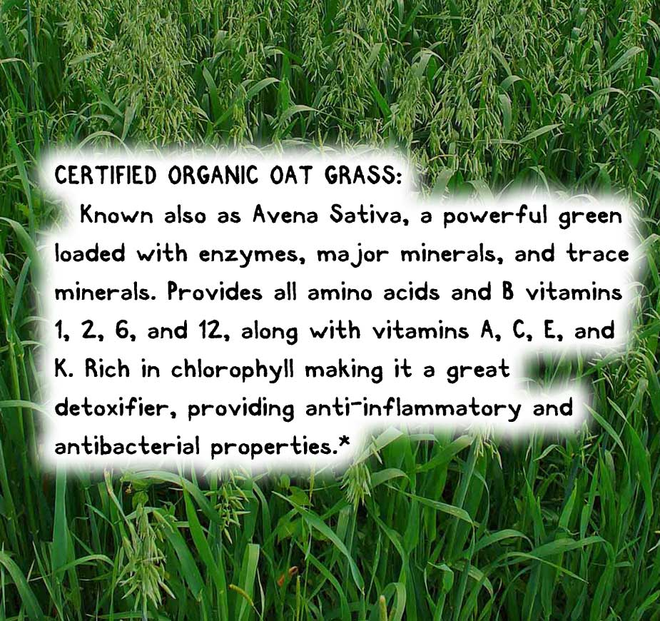 CERTIFIED ORGANIC OAT GRASS: Known also as Avena Sativa, a powerful green loaded with enzymes, major minerals, and trace minerals. Provides all amino acids and B vitamins 1, 2, 6, and 12, along with vitamins A, C, E, and K. Rich in chlorophyll making it a great detoxifier, providing anti-inflammatory and antibacterial properties.