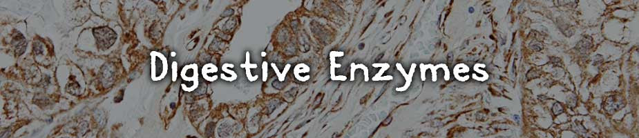 Digestive Enzymes: Digestive enzymes break down components of food to be absorbed by the body. The pancreas secrets digestive enzymes to break down and absorb nutrients. Many enzymes our body produces are destroyed from improper diets, processed foods, and stress. This can have a negative effect on our gut health which in turn can reduce the health of all other bodily functions. Our mental health relies on a healthy gut too. Digestive enzymes have been added to aid in protein digestion as well as overall digestion.*