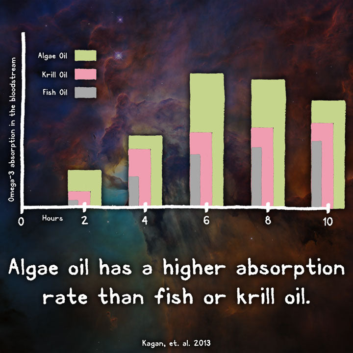 RAWr Algae Oil vs Fish Oil Krill Oil Absorption