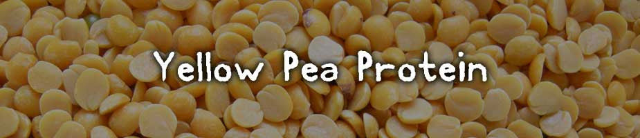 CERTIFIED ORGANIC YELLOW PEA PROTEIN: A powerful protein that is easily digestible. High in branch chain amino acids (BCAA's) which aid in protein synthesis for muscular growth and repair. Yellow Pea is also rich in vitamin D, E, K, and A. The abundance of fiber, magnesium and potassium allows up to 90% to be digested.*