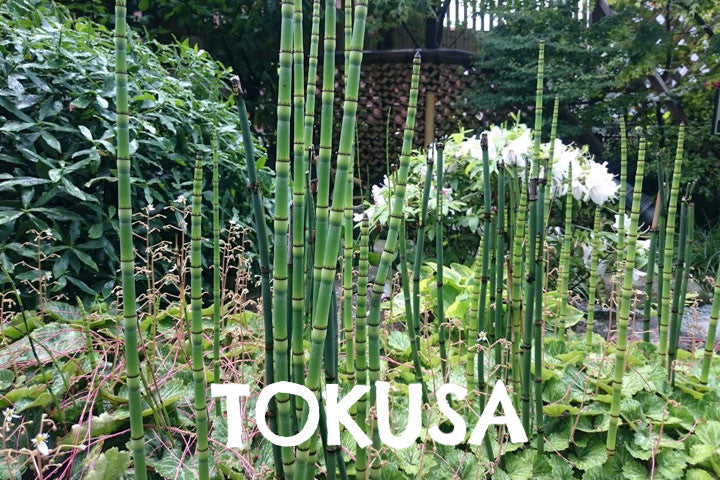 tokusa,japanesedesign