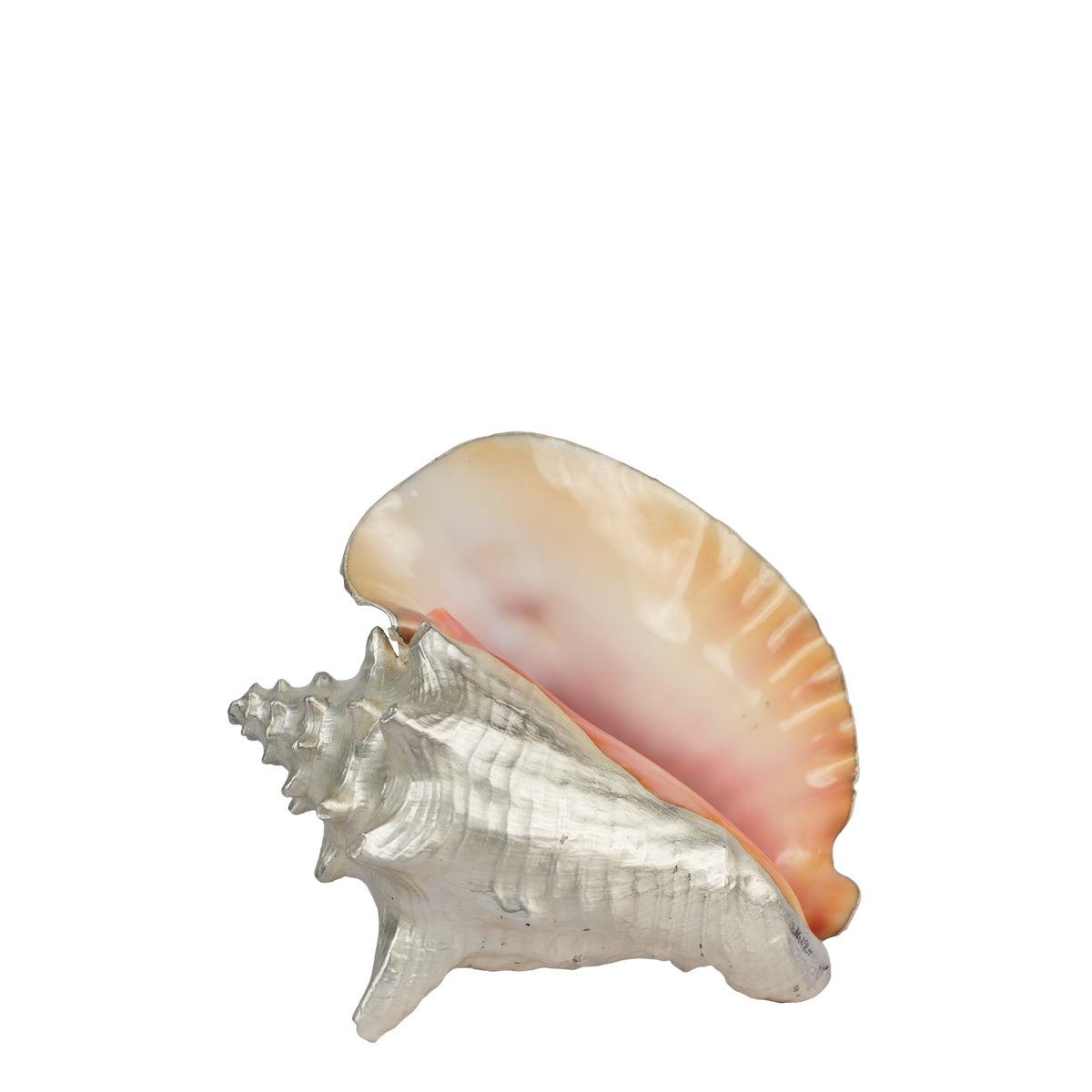 Large Conch Shell in Fine Silver