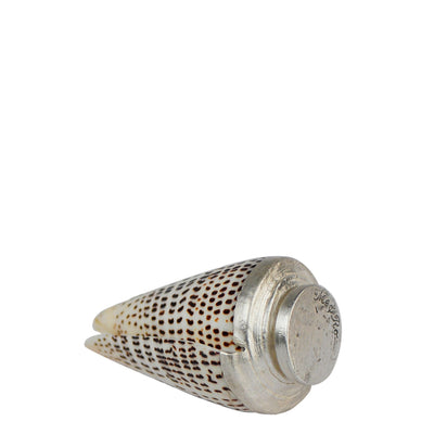 Upright Letter Cone Shell on Silver Base