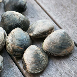 How to make the most out of a  Clam Dig