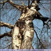 Woman Tree Spirit
