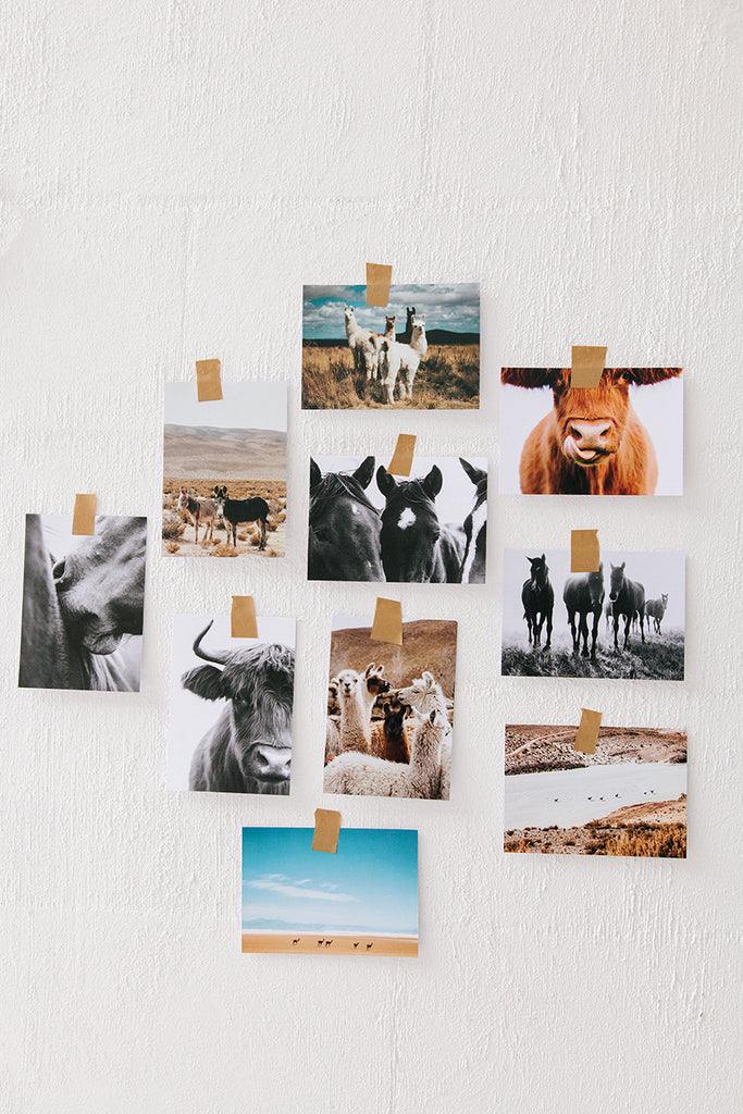 Art Postcards | Pampa Animals