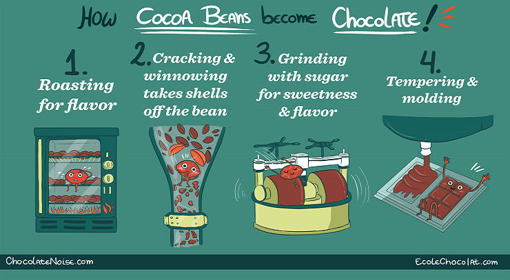 How Cocoa Becomes Chocolate