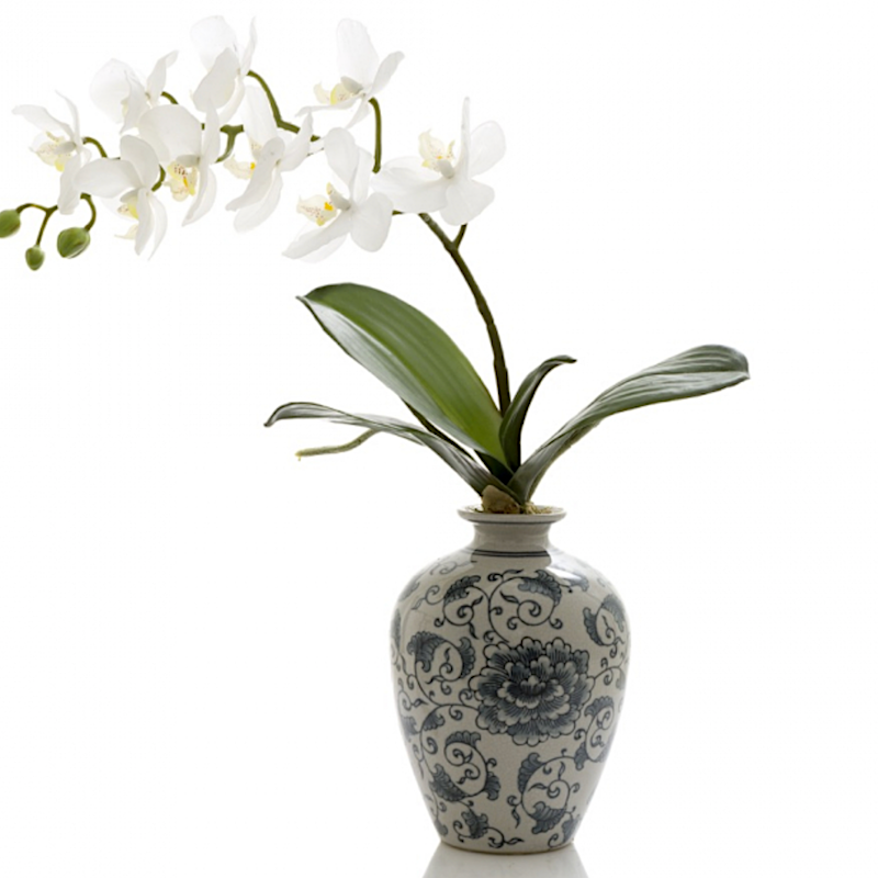 Orchid In Chinois Vase