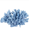 Classic Blue Coral