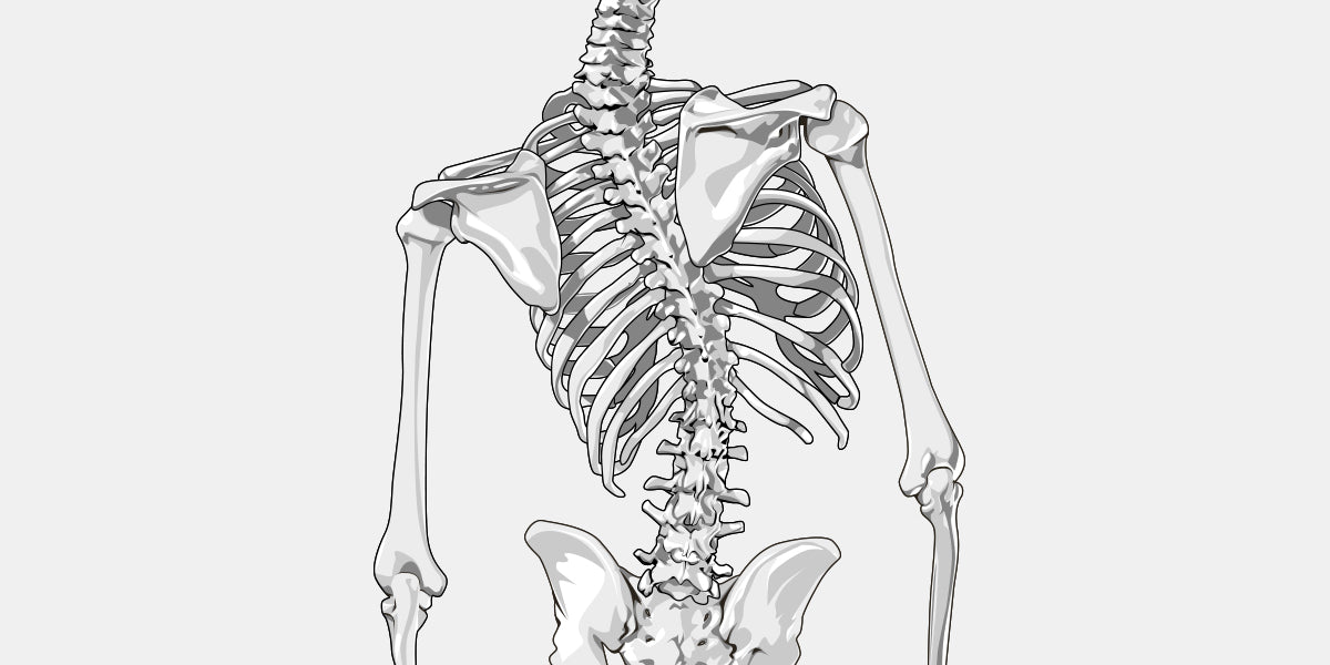 Scoliosis The Complete Injury Guide Vive Health
