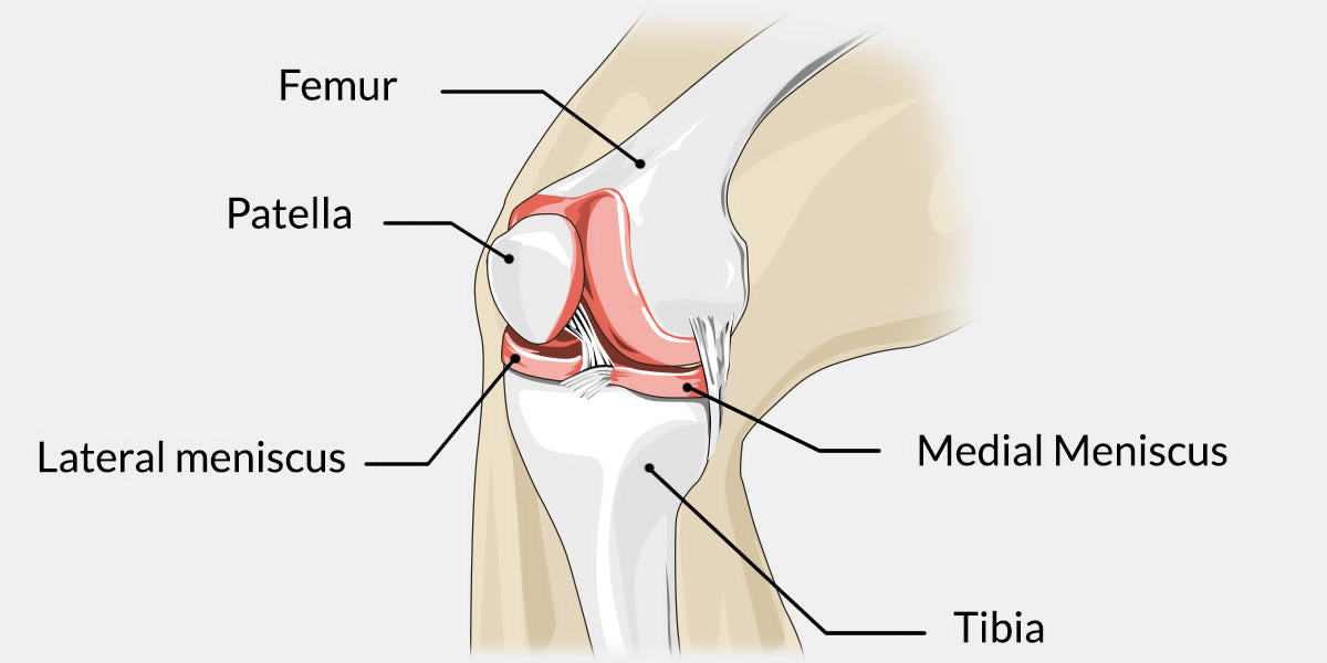 Sprained knee diagram data wiring diagrams sprained knee the complete injury guide vive health rh vivehealth com knee ligament diagram posterior knee ccuart Choice Image