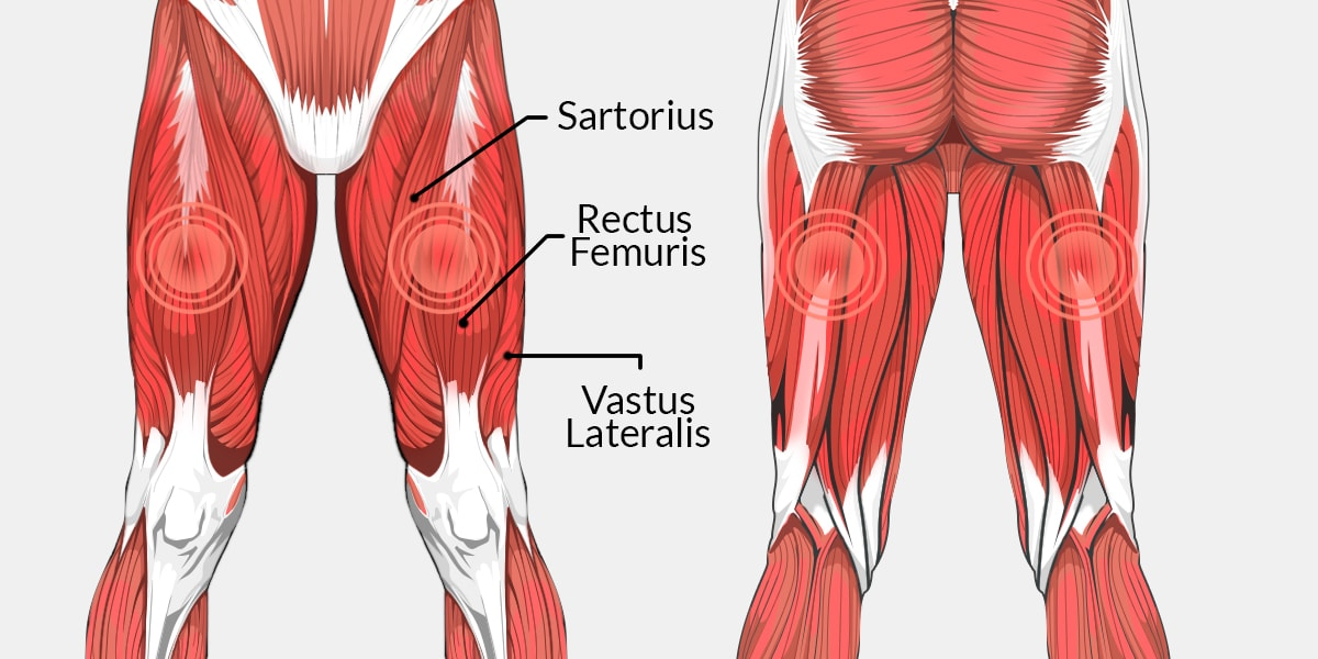 Upper side leg muscles diagram wiring diagram thigh pain the complete injury guide vive health rh vivehealth com posterior upper leg muscles diagram upper leg muscle anatomy ccuart Image collections