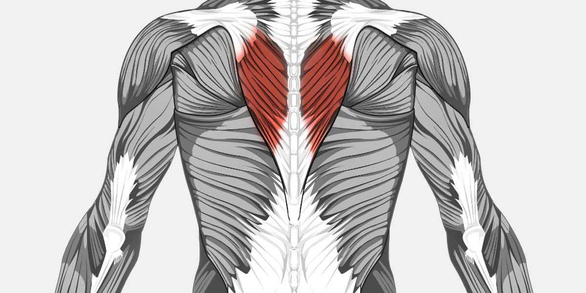 Upper Back Pain Muscle Illustration