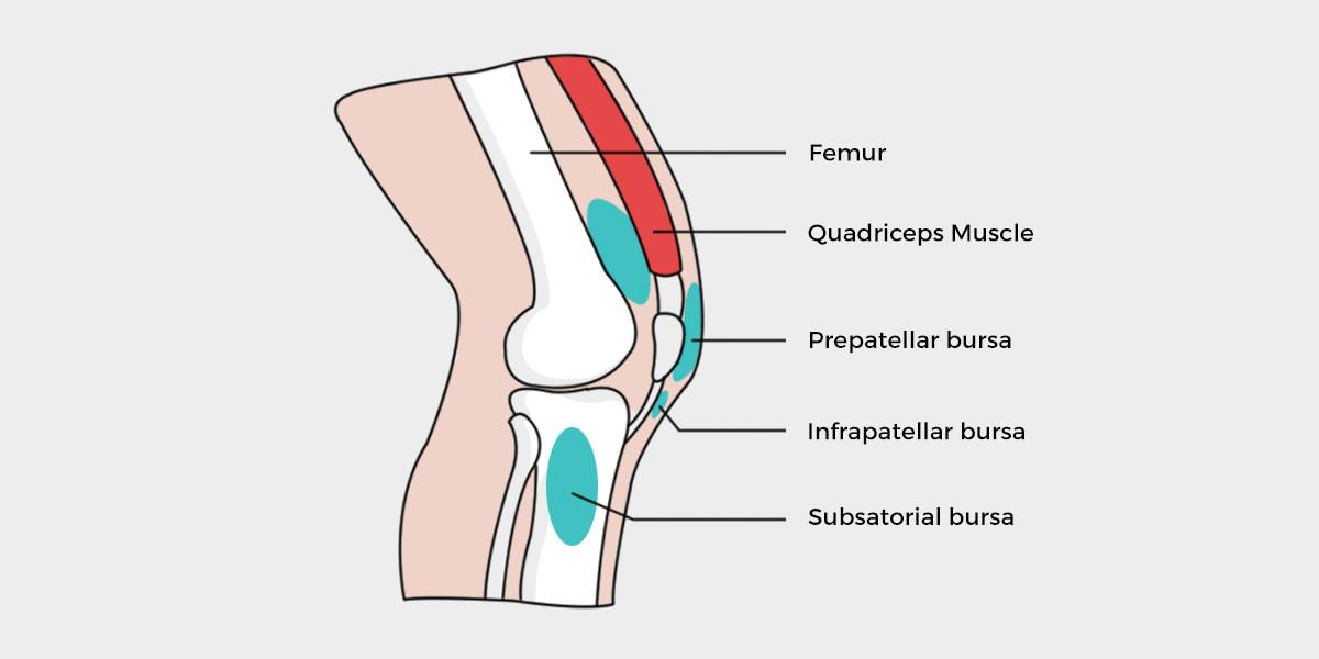 knee bursitis diagram