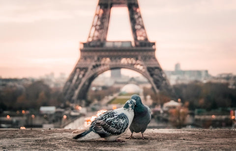 Two romantic pigeons in front of Eiffel tower in Paris