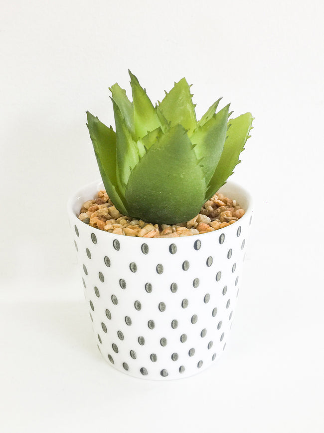 DESERT HEAT SUCCULENT-SPOTTY POT