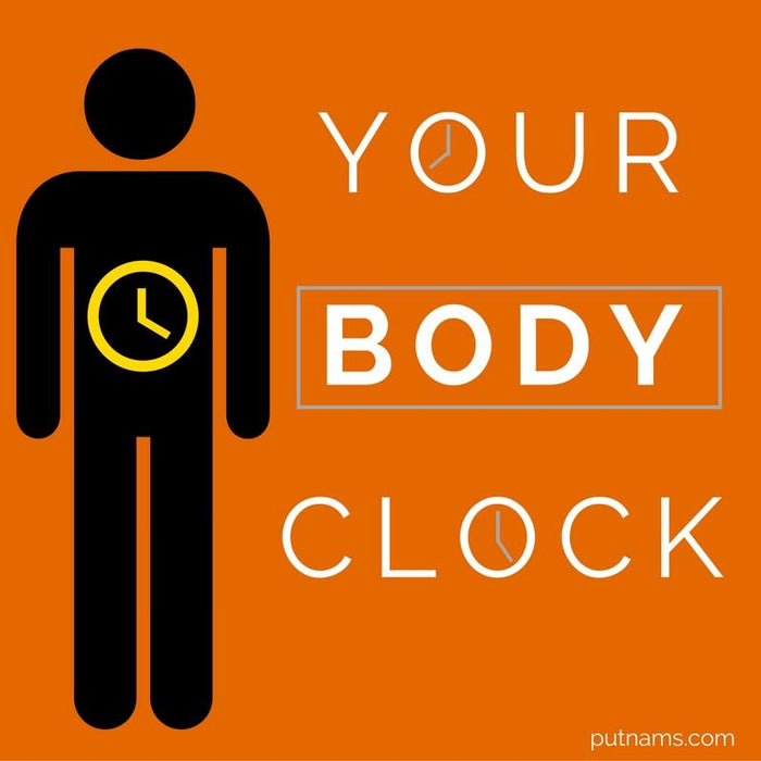 Your Body Clock : How To Set It Sleep Info | Putnams
