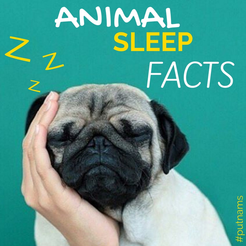 Animal Sleep Facts; dogs cats elephants bats