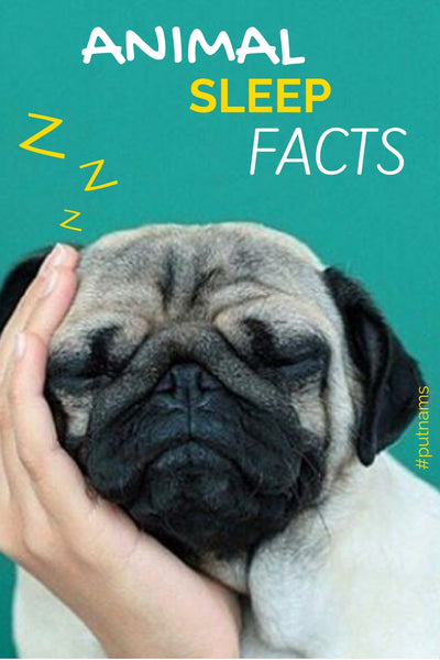animal sleep facts dog cats