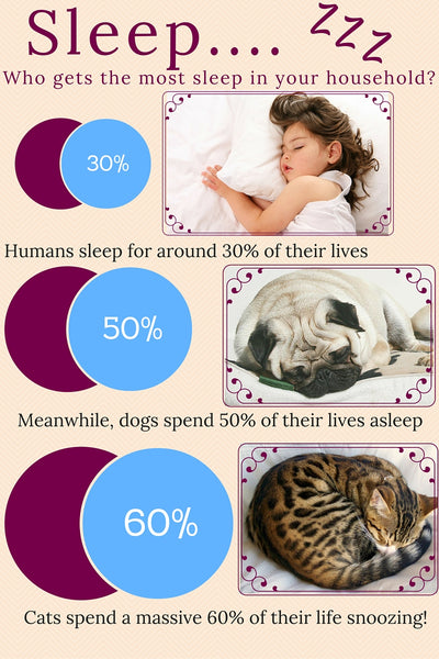 pets sleep info graphic facts