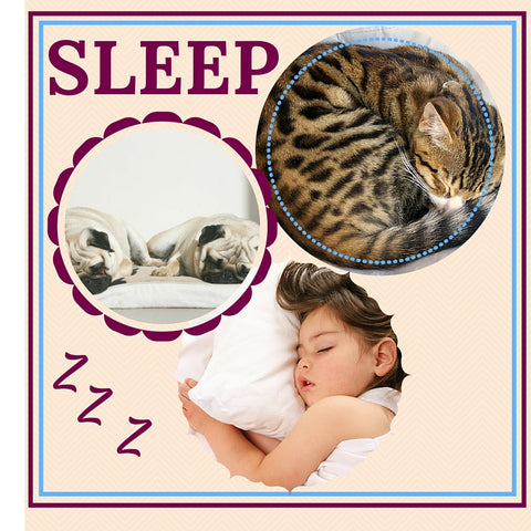 cat sleep mattress pillow uk