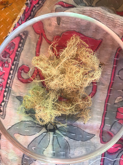 Usnea (Usnea barbata) - Witching Herbs - Keven Craft Rituals