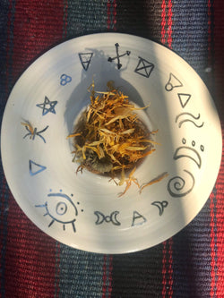 Calendula (Calendula officinalis) - Witching Flowers - Keven Craft Rituals