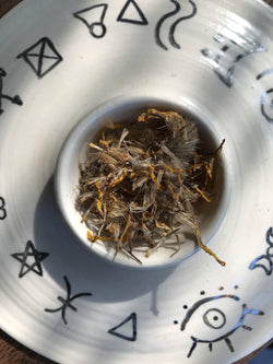 Arnica (Arnica montana) - Witching Flowers - Keven Craft Rituals