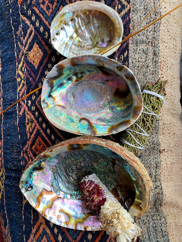 Abalone Shell - Traditional Incense/Sageing Base