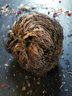 Jericho Flower / Resurrection Plant - Ritual Blessing - Keven Craft Rituals
