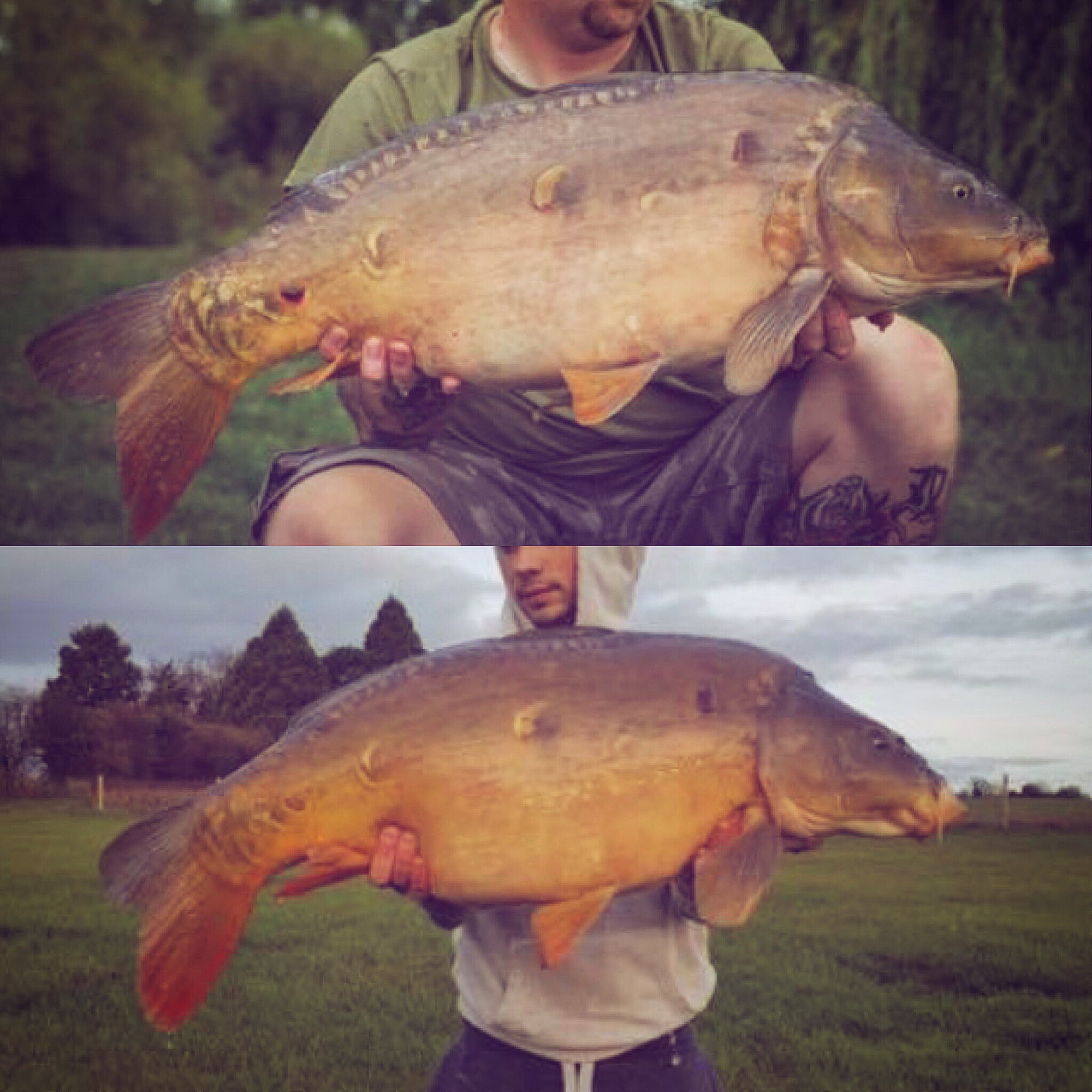 Ratfyn and Watergate Farm Fisheries carp progress